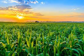 Proroga della rideterminazione del valore di acquisto dei terreni e delle partecipazioni – 2019
