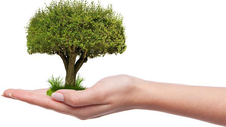 Bonus verde ancora in vigore per tutto il 2021